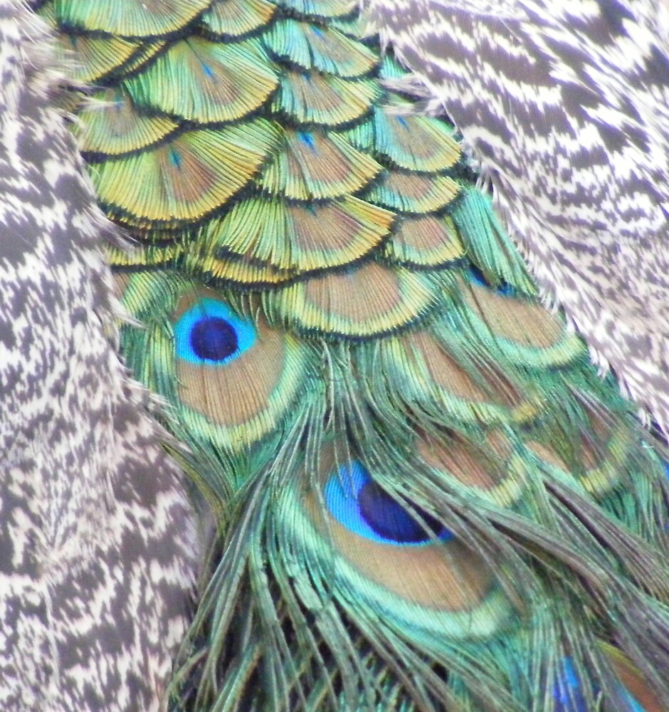 peacock feathers - at Launceston Gorge by gaylene