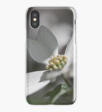 Dogwood Tree in Full Bloom This Season iPhone Case