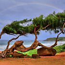 Ironwood Tree by DJ Florek