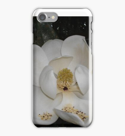 Southern Magnolia - first blossom iPhone Case/Skin