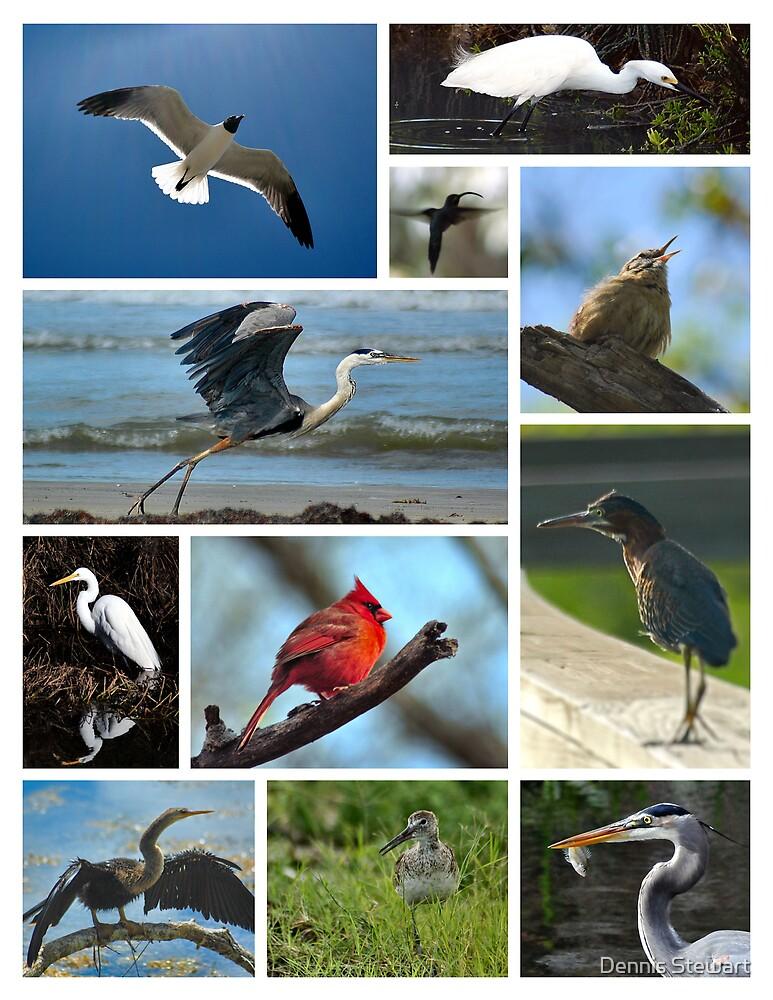 BIRD COLLAGE (POSTER) by Dennis Stewart