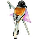 Oriole Bird with Triangle Watercolor Painting by namibear