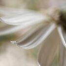 The petal by Silvia Ganora