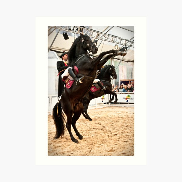 Menorcan dressage - Spanish step Art Print