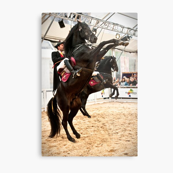 Menorcan dressage - Spanish step Metal Print