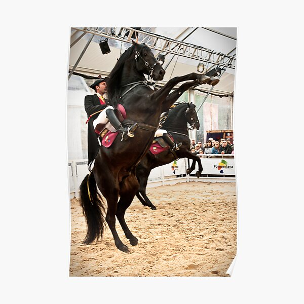 Menorcan dressage - Spanish step Poster