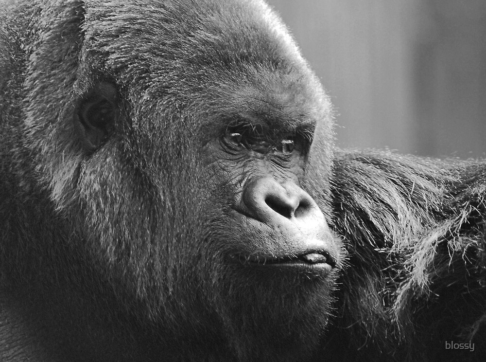 Bobby the Gorilla by Susan  Bloss