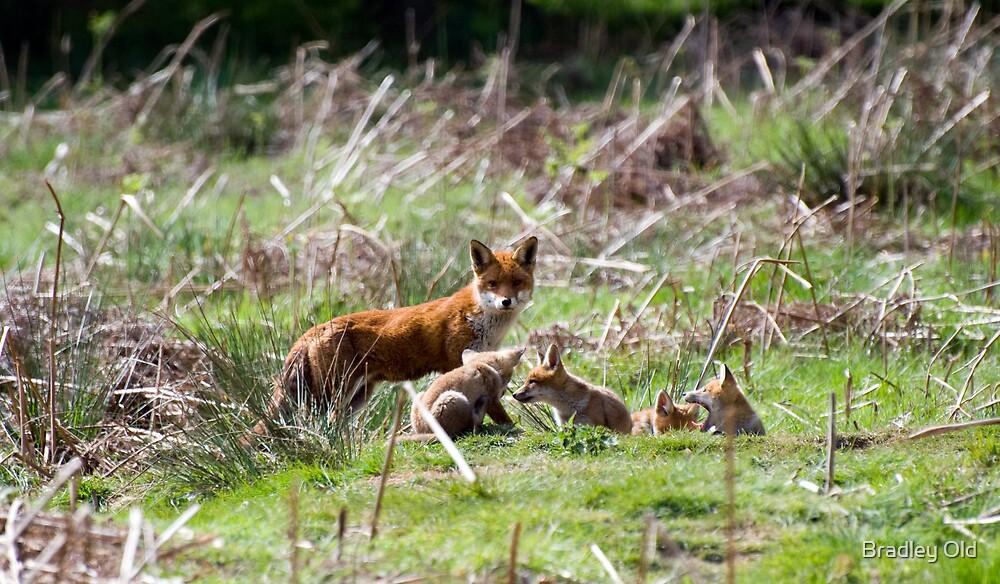 Fox Family by Bradley Old