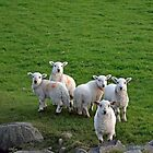 Counting Sheep. by Michael Haslam