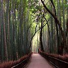 Bamboo Breathtaking by fenjay