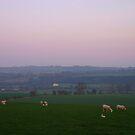 Misty pasture by Martina Fagan