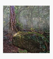 the gondwana rainforest Photographic Print