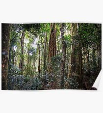 the gondwana rainforest Poster