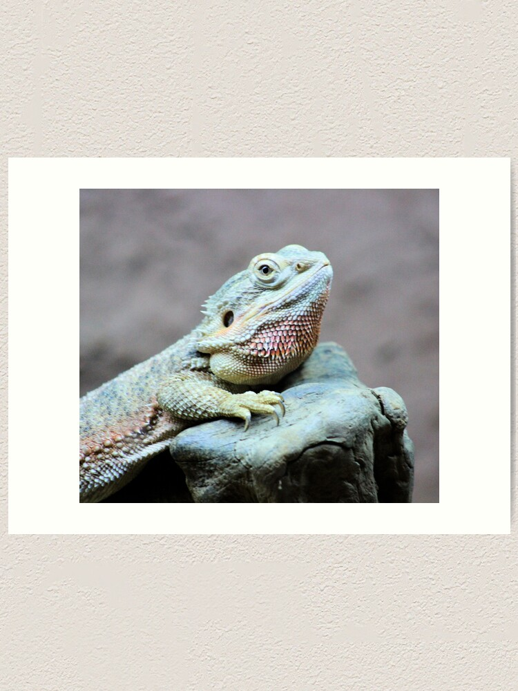 Alternate view of Iguana Art Print