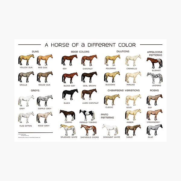 Horse Colors Poster Photographic Print
