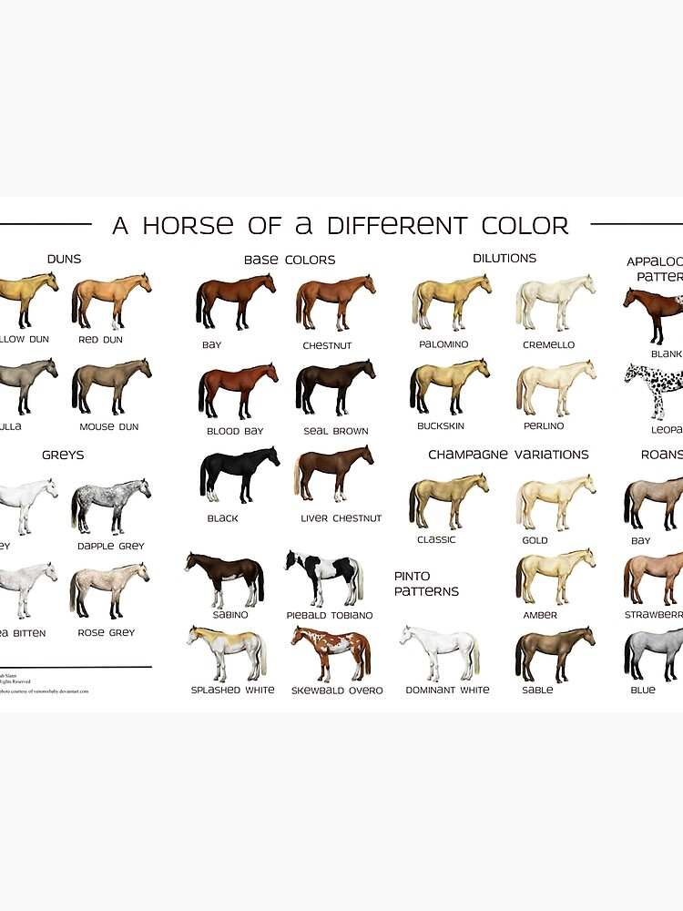 Horse Colors Poster\