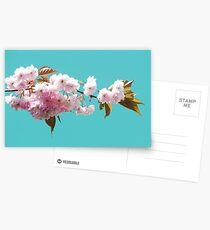 Cheery Blossom Postcards