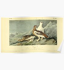 James Audubon Vector Rebuild - The Birds of America - From Drawings Made in the United States and Their Territories V 1-7 1840 - Rock Ptarmigan Poster