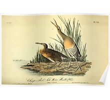 James Audubon Vector Rebuild - The Birds of America - From Drawings Made in the United States and Their Territories V 1-7 1840 - Clapper Rail or Salt Water Marsh Hen Poster