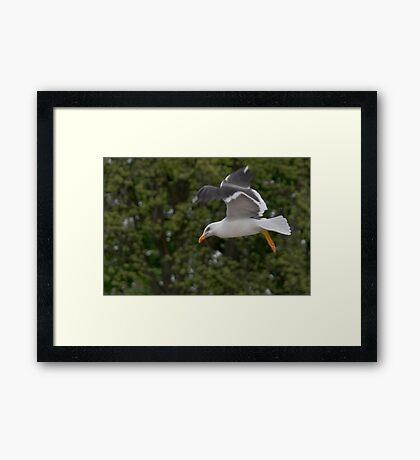 Seagull II Framed Print
