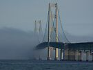 Morning Fog by Shelly Harris