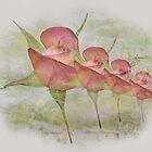 Floral Chorus Line by CarolM
