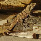 5718 iguana by pcfyi