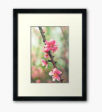 pink & green blossoms Framed Print