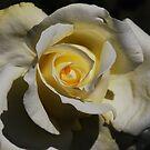 Bloom by Chamika Amarasiri