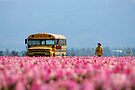 School Bus, Magic Bus. by Todd Rollins