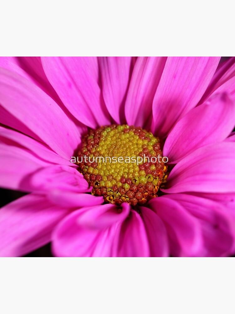 Schön in pink von autumnseasphoto