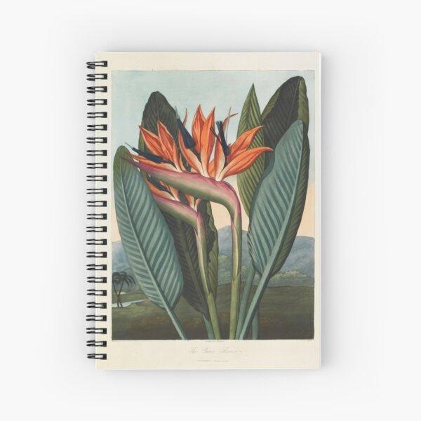 Botanical illustration: Bird of Paradise (Strelitzia) – State Library Victoria Spiral Notebook