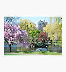 Boston Public Garden Photographic Print