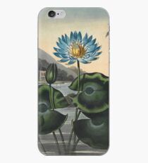 Botanical illustration: Blue Egyptian water lily by Robert Thornton – State Library Victoria iPhone Case