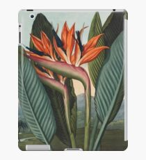 Botanical illustration: Bird of Paradise (Strelitzia) – State Library Victoria iPad Case/Skin