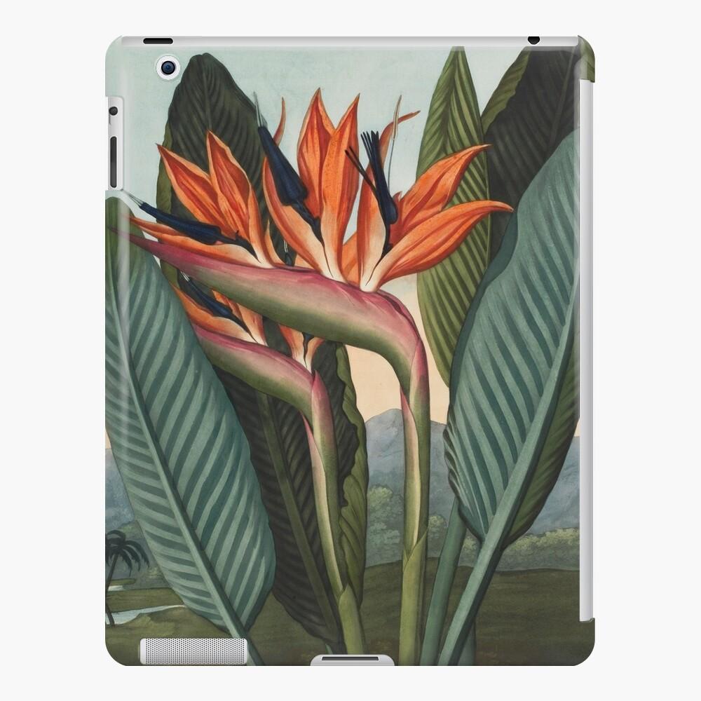 Botanical illustration: Bird of Paradise (Strelitzia) – State Library Victoria iPad Case & Skin