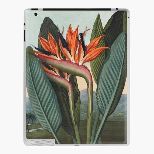 Botanical illustration: Bird of Paradise (Strelitzia) – State Library Victoria iPad Skin