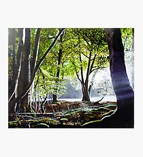 Woodland Dawn Photographic Print