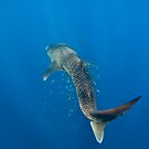 Giant of the Sea by aabzimaging