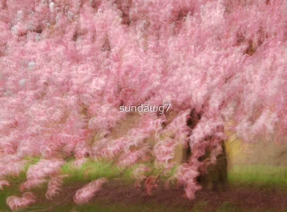 Blossom Gala by sundawg7