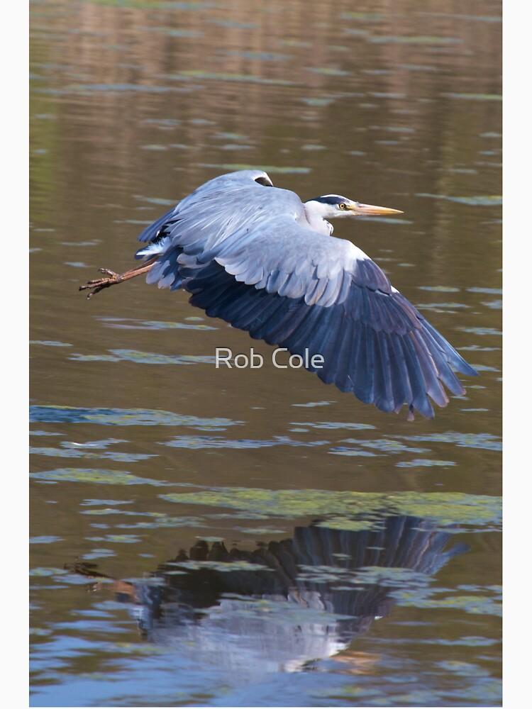 A Grey Heron (Ardea cinerea) in flight. by robcole
