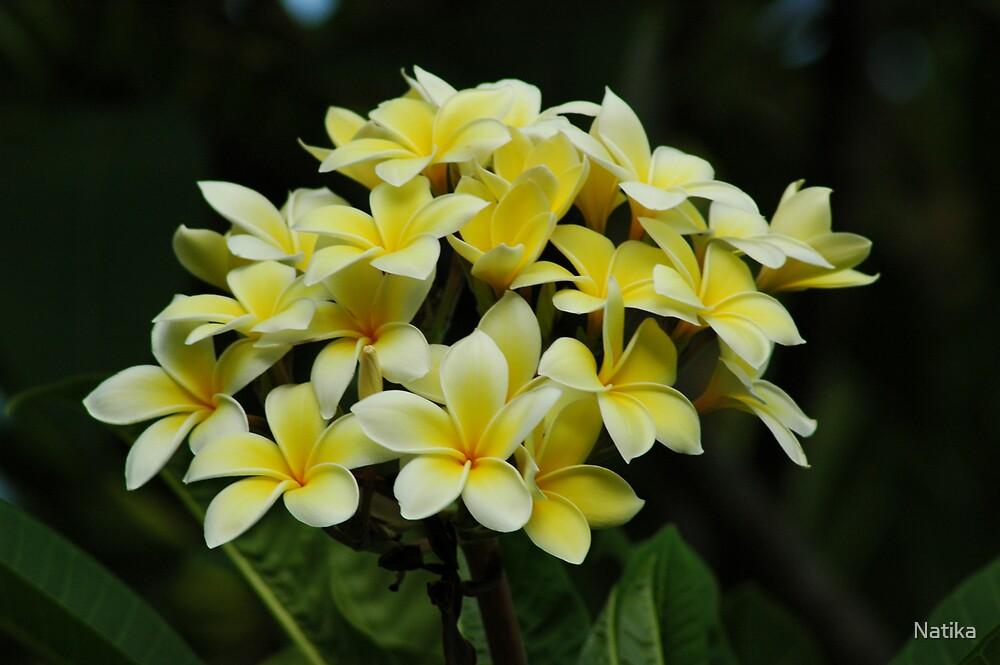 Yellow Frangipanis by Natika