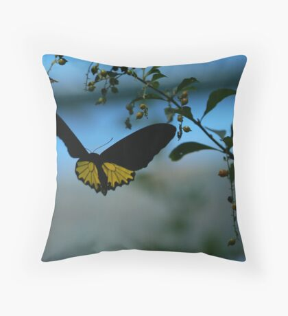 Golden Birdwing butterfly - on the wing Throw Pillow