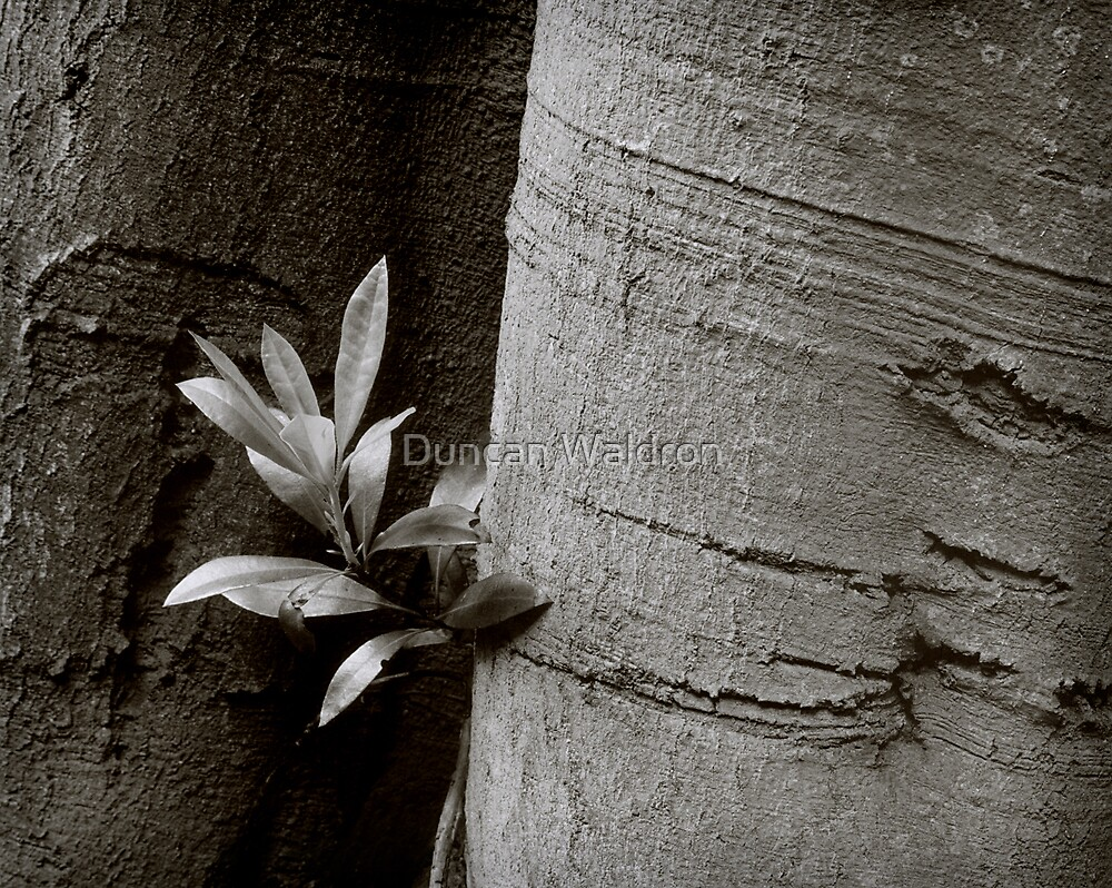 Beech & rhododendron by Duncan Waldron