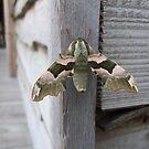 Moth by Kayleigh Sparks