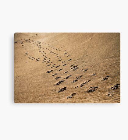 Crossing Paths II Canvas Print