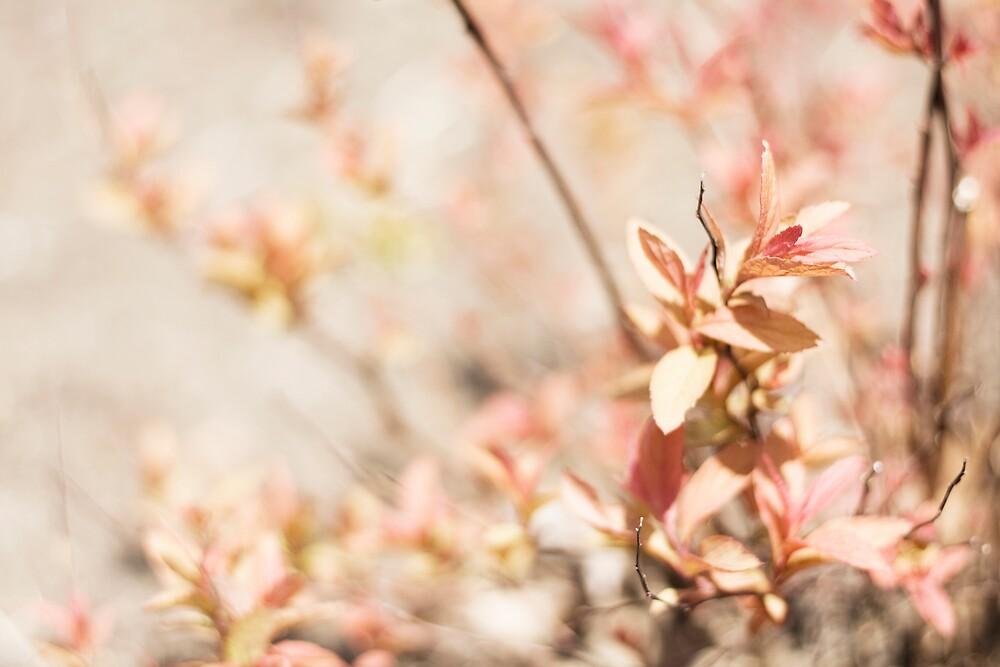 Pink Vintage Sunday by sandra arduini