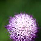 Pink tendrils macro by mooksool