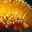 Golden drops by mooksool