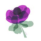 An Anemone  by Mireille  Marchand